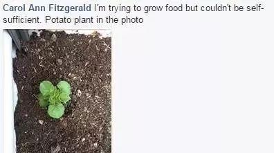 自家後院種菜前請做土壤檢測,因五分一墨爾本種植土壤鉛超標!-澳洲唐人街