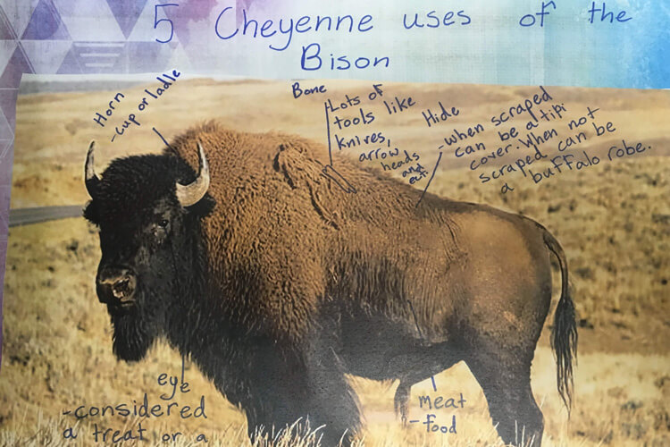 Students studied bison