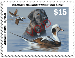 The 2019 Delaware Waterfowl Stamp, above, features a black Labrador retriever and long-tailed ducks. The 2020 stamp image will be chosen April 4.