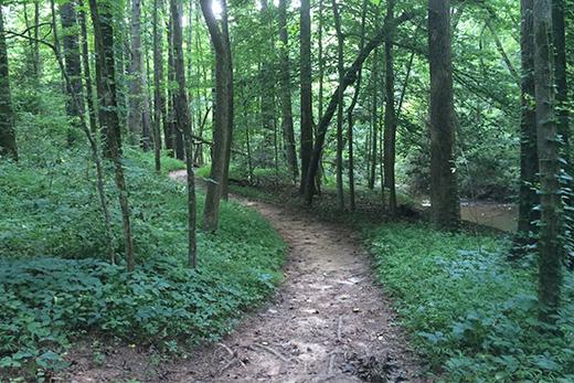Hahn Woods to get improvements through Trees Atlanta project  Emory University  Atlanta GA