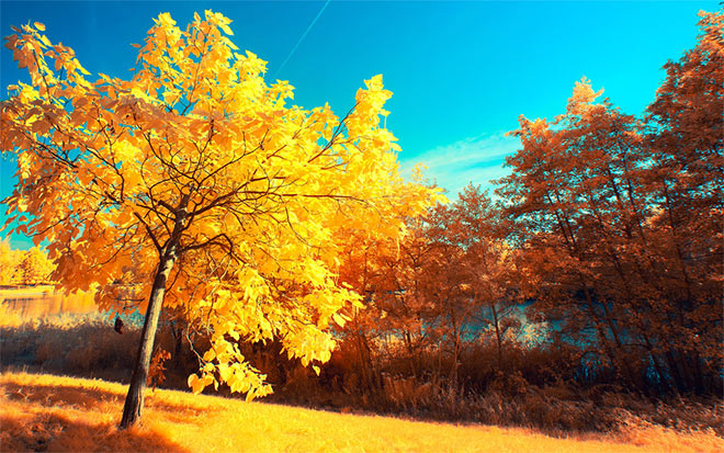 Yellow Trees by myINQI