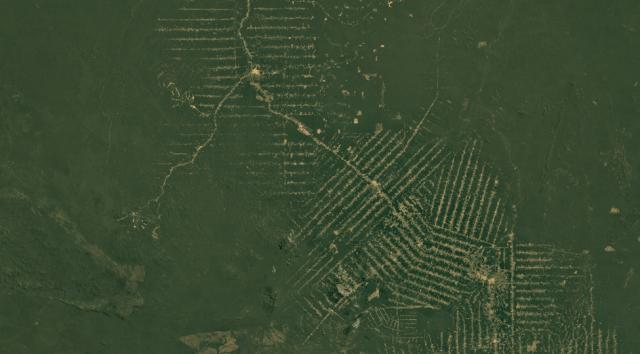 Satellite image of Rondonia, Brazil, in 1984