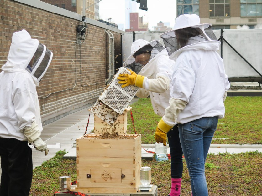 beekeepers working on FIT's rooftop hives