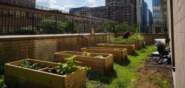 A row of wooden plant beds in front of a city landscape