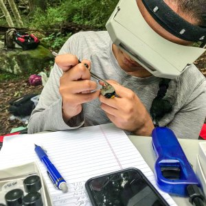 Medha Pandey checks a bird for ticks