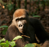 Global Landscapes Forum to fast-track livelihood, wildlife protection in Congo Basin