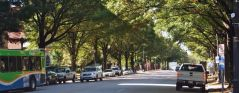City water strategy can offset threat to urban forests from hot temperatures, pests