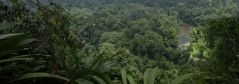 Forest loss leads to local climate change effect in Borneo