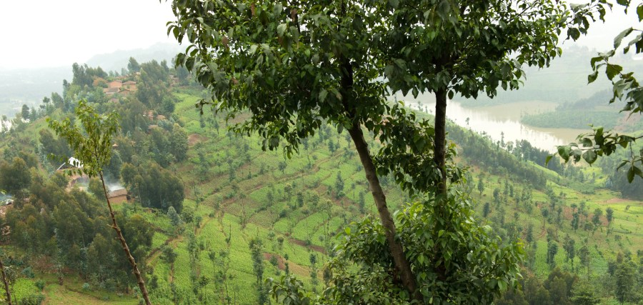 Agroforestry has been proven to increase land productivity and resilience to climate change in landscapes across the world. ICRAF