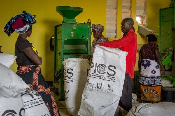 Villagers in a rice factory, Tanzania
