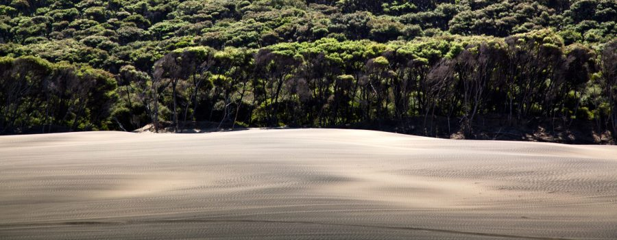 A coastal Manuka forest in New Zealand, where Māori knowledge is being used to battle plant diseases.