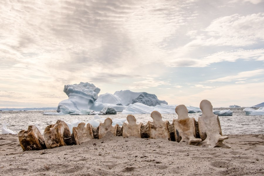 Whale bones and icebergs in Greenland. Helen@littlethorpe, Flickr