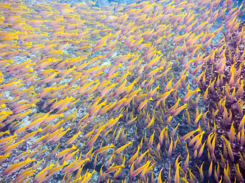School of fish, Krabi, Thailand