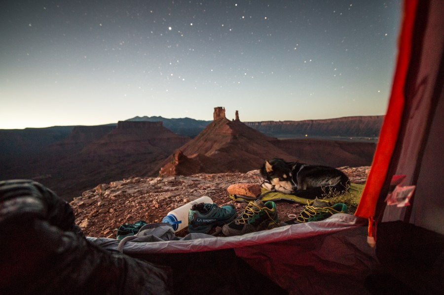 Rees's dog Baloo under the stars in the southwestern U.S. Courtesy of Taylor Rees