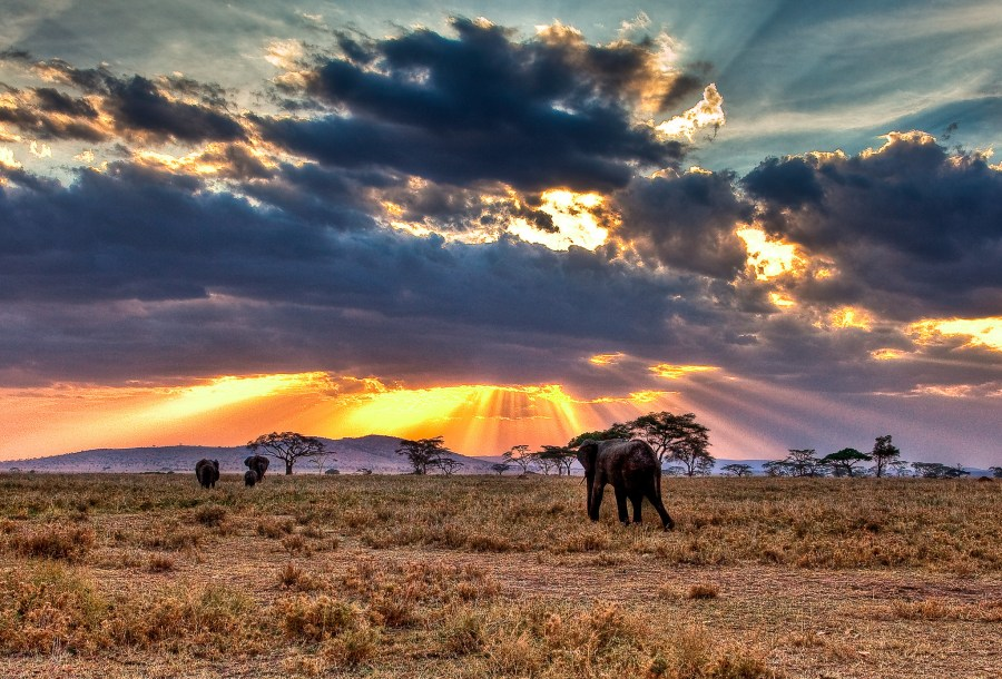 In the savannahs of the Serengeti Plain, Tanzania. Noel Feans, Flickr