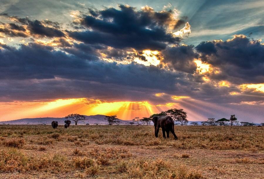 In the savannahs of the Serengeti Plain, Tanzania. Noel Feans, Flickr