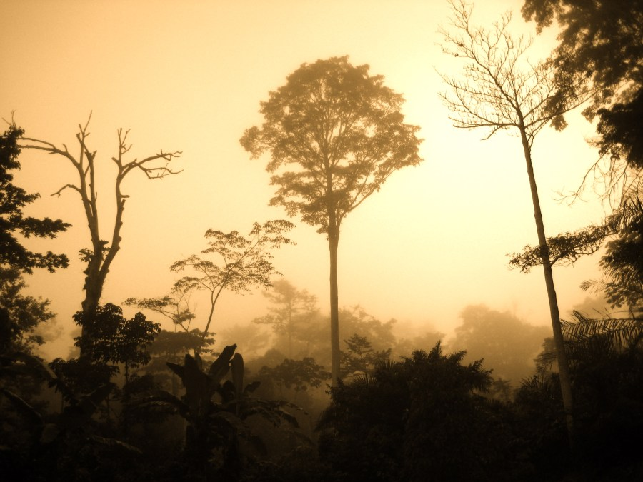 Hazy days in the Congo Basin's rainforest, one of the most prominent African landscapes. Corinne Staley, Flickr