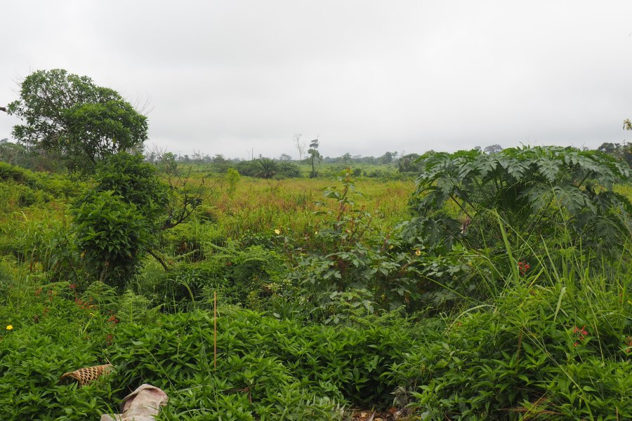 These degraded lands were once a lush tropical forest. Ahtziri Gonzalez, CIFOR