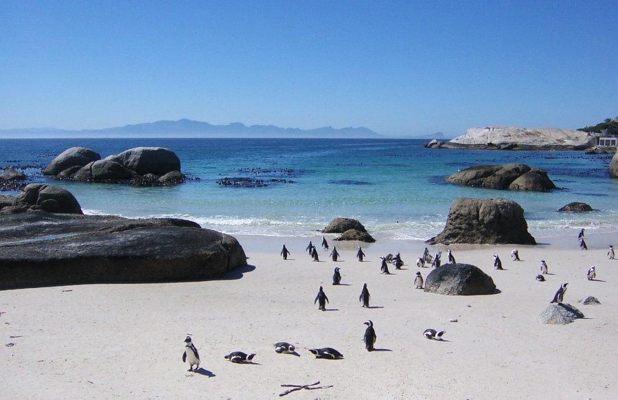 Penguins on a beach near Cape Town, South Africa. Francois de Halleux, Flickr