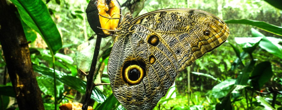 A butterfly in Peru. Governments should create more economic incentives to protect biodiversity, an OECD report urges. Jeffrey van Lent, CIFOR