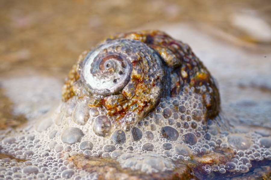 The repeating patterns of a snail's spiral. blese, Flickr