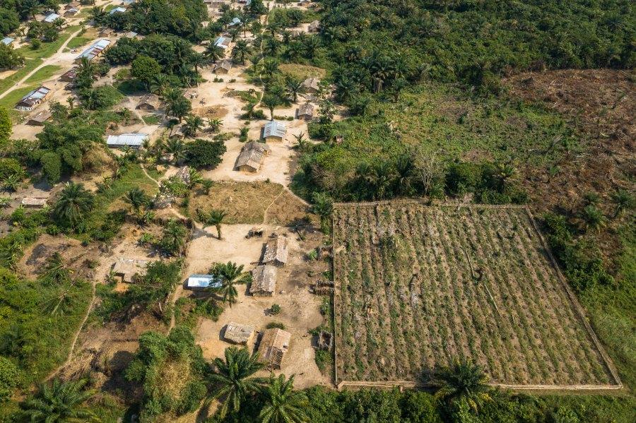A teak plantation plot in the Democratic Republic of Congo. Axel Fassio, CIFOR