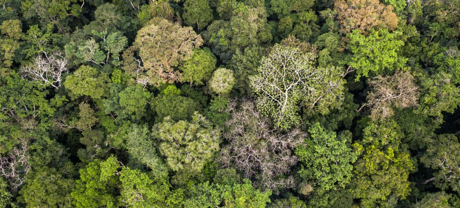 A forest in the Democratic Republic of Congo, where management plans have grown to now cover 20 million hectares of forests, despite the increasingly rate of forest area loss in Africa. Axel Fassio, CIFOR