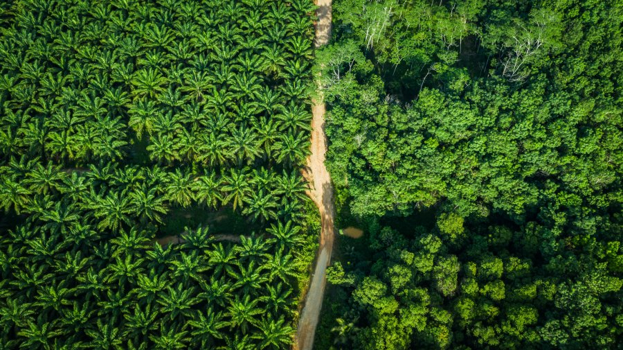 Oil palm plantations, left, slowly overtake the landscape in Kalimantan, Indonesia. Ricky Martin, CIFOR