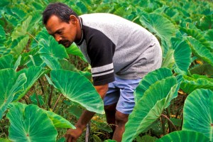 Farmer in Fiji