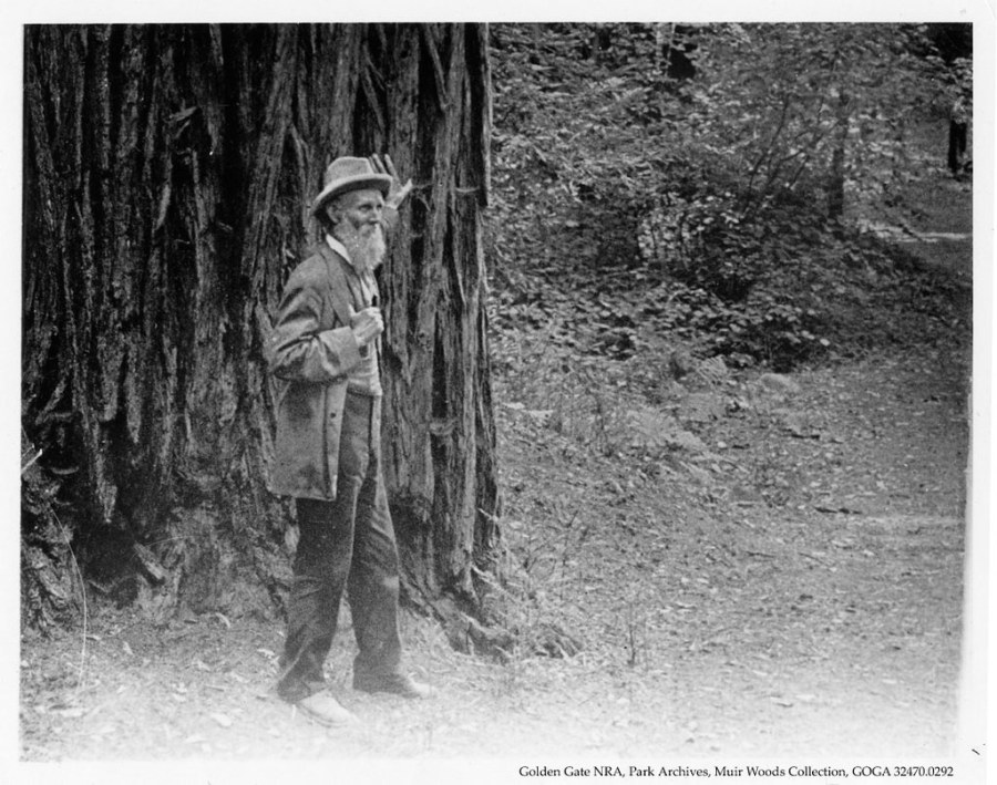 One of history's most famous naturalists, John Muir, described species of the Araucariaceae family as the most interesting trees he had seen. Goga Park Archives, Flickr