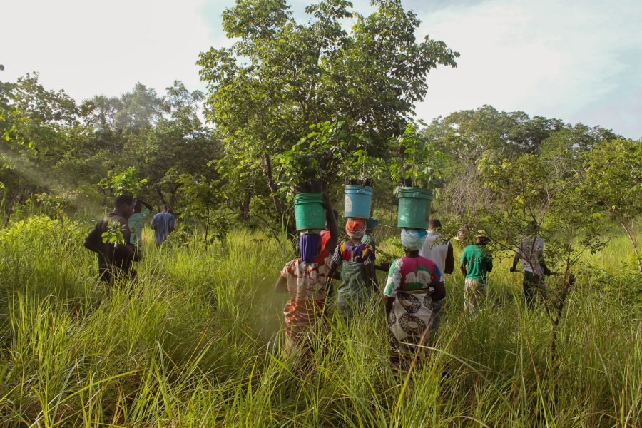 Locals head out to plant mpingo trees near Ngea, a village in Tanzania. Courtesy of the Mpingo Conservation and Development Initiative