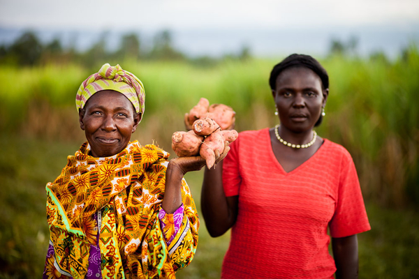 Smallholder farmers in Kenya hold sweet potatoes, a high-value crop. USAID