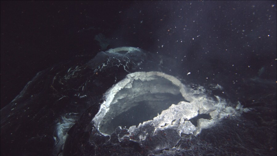 A hydrothermal vent spews hot water and bits of bacterial mat at Axial Seamount. Some microbes can survive in such extreme environments. Oregon State University, Flickr