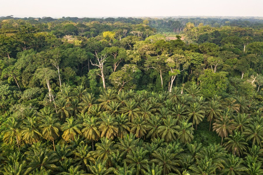 A palm tree plantation up against natural forest in the Democratic Republic of Congo. Axel Fassio, CIFOR