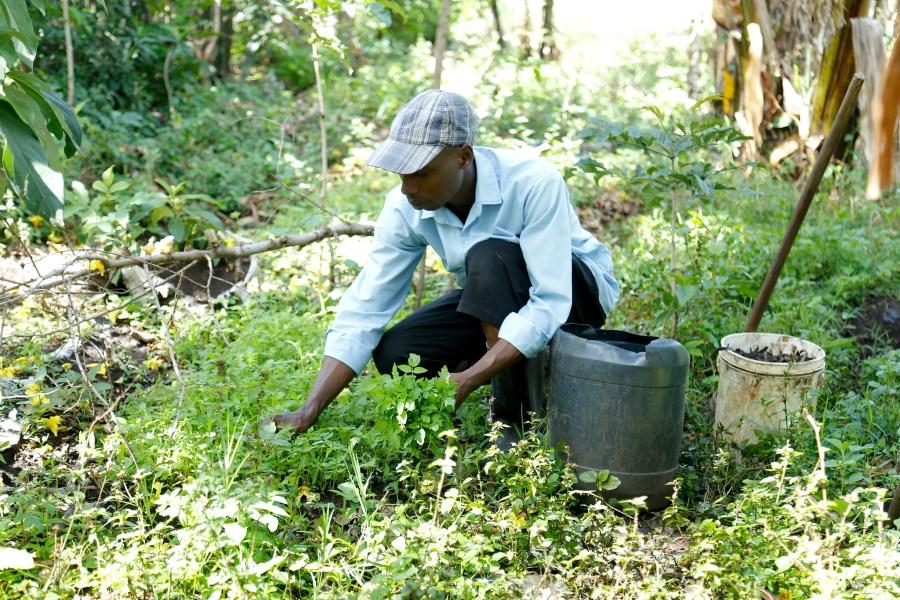 A smallholder farmer in western Kenya. Joseph Gachoka, World Agroforestry