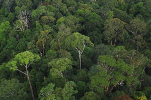 Forested area in Lambir Hills National Park in Sarawak, Malaysia. Forest Global Earth Observatory, Flickr