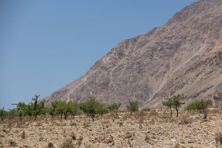 Fruit trees manage to grow in a rocky, dry landscape in Tajikistan. Bioversity International, Flickr