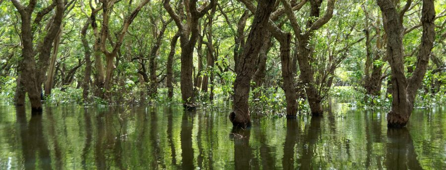 Mangrove forests have been reported to buffer areas against various storms - a valuable ecosystem service. Jakub Hałun, Wikimedia Commons