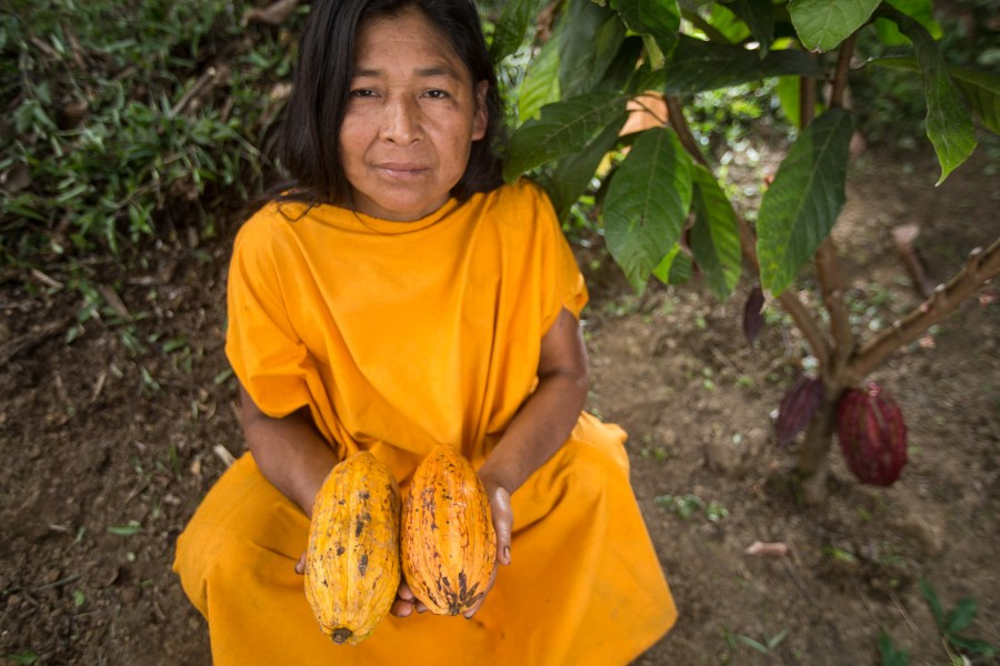 A Peruvian smallholder holds cacao fruits from her plot. Marlon del Aguila Guerrero, CIFOR