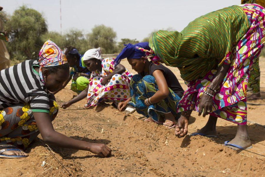 The 11 core countries of the Great Green Wall are Burkina Faso, Chad, Djibouti, Eritrea, Ethiopia, Mali, Mauritania, Niger, Nigeria, Senegal, and Sudan. Courtesy of UNCCD