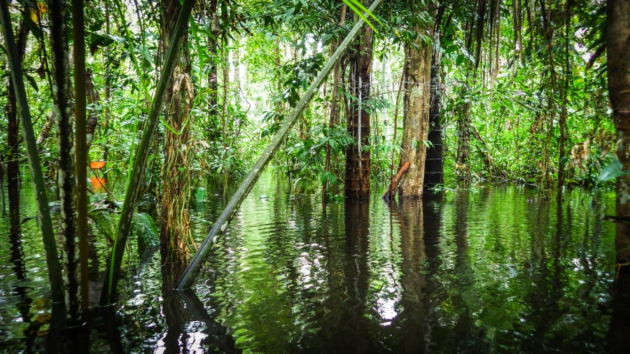 A peatland forest in Peru. Kristell Hergoualc'h, CIFOR