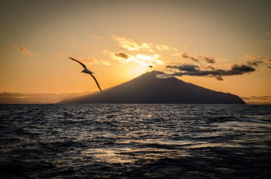 A sea bird flying near Tristan da Cunha Island. Dan Myers, National Geographic