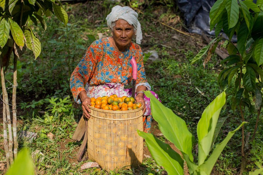 An organic farmer who uses agroforestry practices to grow palm and areca nuts in Jambi province, Indonesia. Tri Saputro, CIFOR
