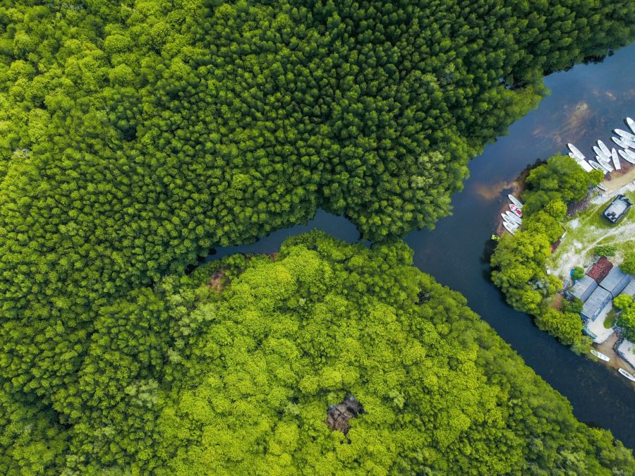 A mangrove forests, such as this one in Indonesia, can prevent coastal erosion and flooding. Joel Vodell, Unsplash