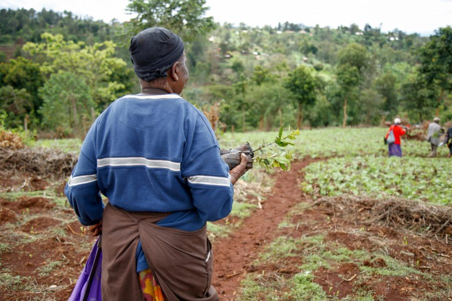 Local community members plant trees in the area. Courtesy of Nature Kenya