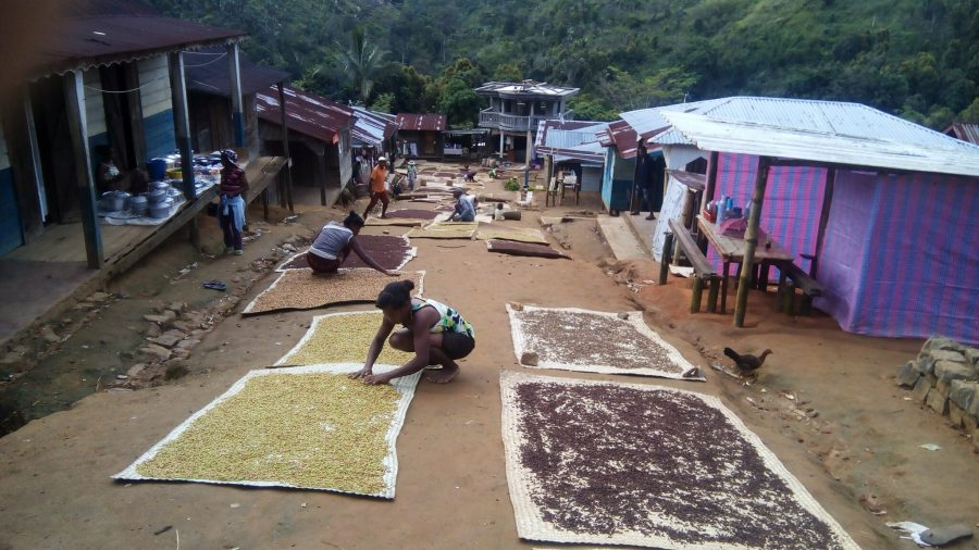 Permaculture farmers arrange their crops near the forest.  Félix Ratelolahy, WCS