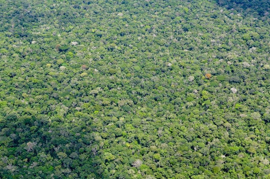 El dosel del bosque húmedo amazónico en el estado de Amazonas, Brasil. Neil Palmer, CIAT