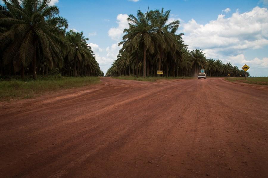 Inside a palm oil plantation in Pará, Brazil. Miguel Pinheiro,CIFOR