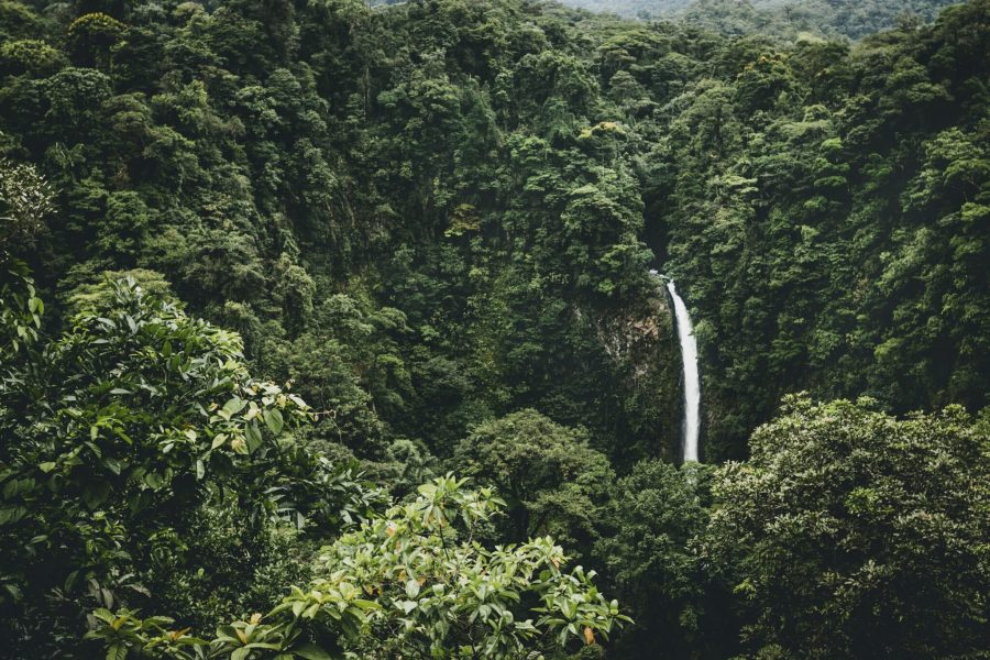 Tropical areas, such as this forest in Costa Rica, contain much of the world's biodiversity - including tree species. Isabella Jusková, Unsplash