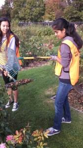 Freshmen Spend Day Volunteering at San Jose Municipal Rose Garden